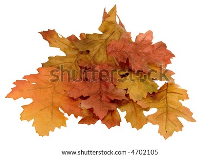 Fall Leaves isolated on white background. - stock photo