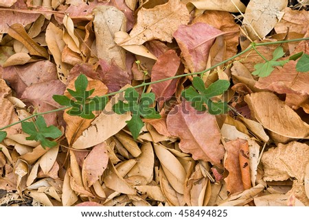 Fall leaves of an autumn background,fresh and dried