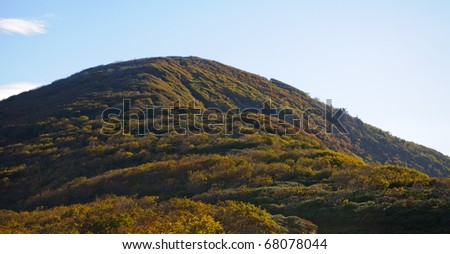 fall leaves on a mountain