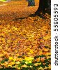 fall leaves on ground - stock photo