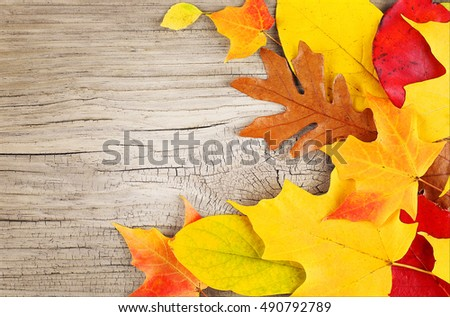 Fall Leaves on Old Wooden Background
