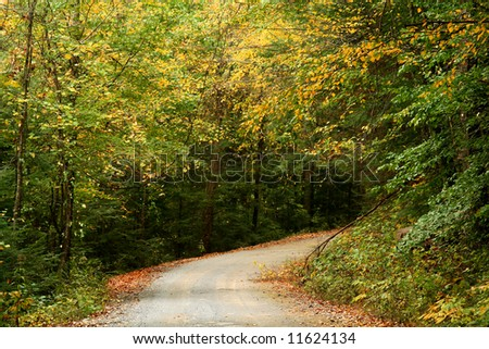 Fall Leaves on rural gravel road in Northwest Georgia Mountains - stock photo