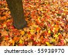 fall leaves on the ground - stock photo