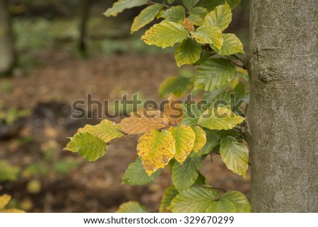 Fall leaves on tree - stock photo