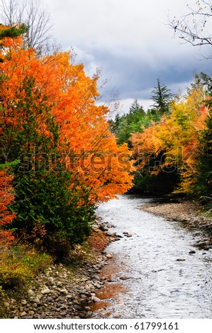Fall leaves on trees next to a small creek on a stormy day. - stock photo