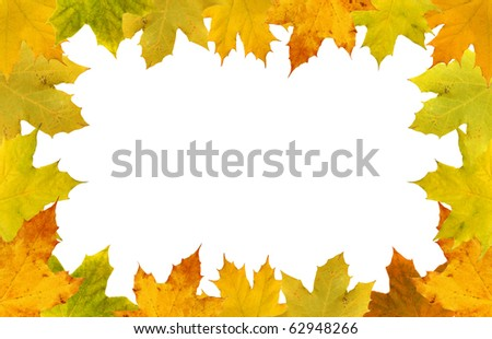 Fall leaves on white background, fall border