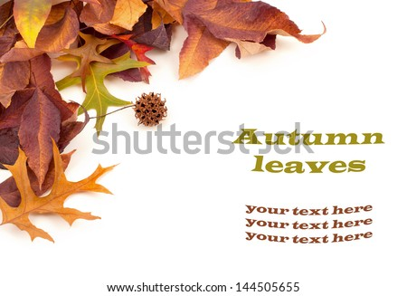 Fall Leaves on White Background with copyspace or room or space for your text or words, Horizontal - stock photo