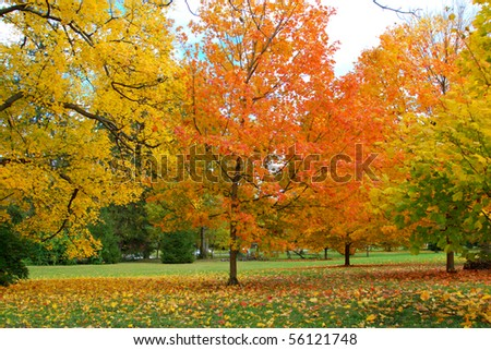 fall leaves trees