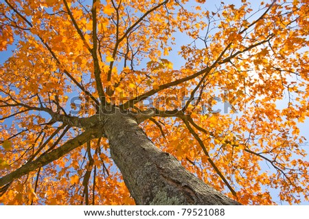 fall leaves trees - stock photo