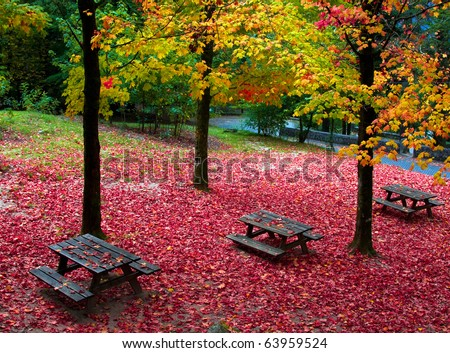 Fall leaves trees at Geres national park, north of Portugal - stock photo