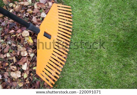 Fall leaves with rake on green lawn. Plenty of copy space - stock photo
