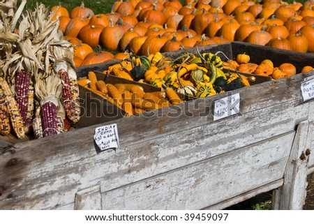 fall market stand