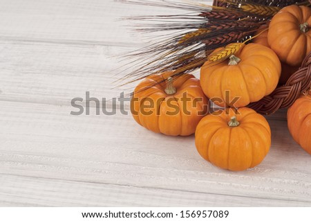 Fall Mini Pumpkins and Wheat Spilling out of a Cornucopia with space or room for your words on white boards - stock photo