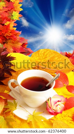 fall morning - still life with cup of tea