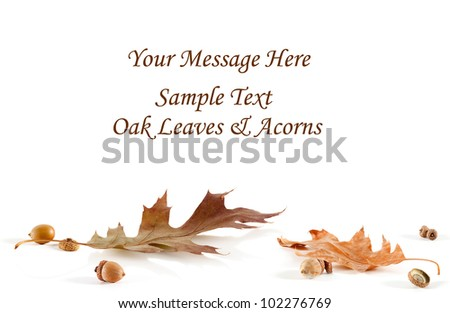 Fall Oak leaves and acorns form a base for a blank message card - stock photo
