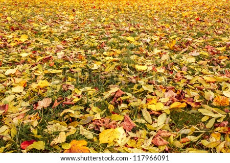 Fall orange and yellow autumn leaves on ground for background or backdrop - stock photo