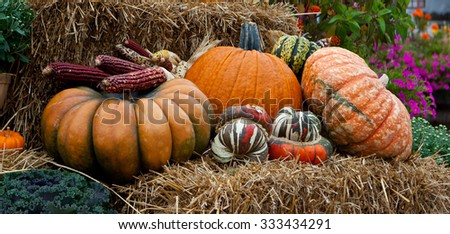 Fall Pumpkin and Gourds on Straw