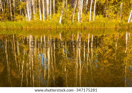 Fall River, reflected in the water autumn trees. Autumn trees in gold - stock photo