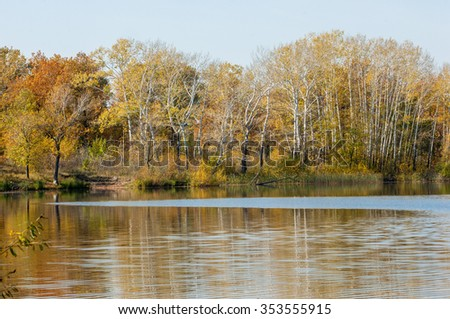 Fall River, reflected in the water autumn trees. Autumn trees in gold