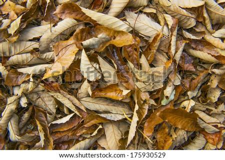 Fall season, tree leaves falling one place - stock photo