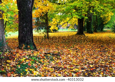 fall tree and leaves in the park