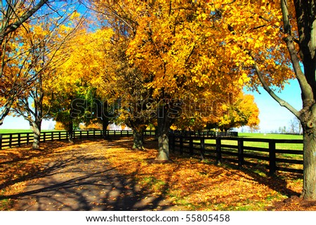 fall tree road - stock photo