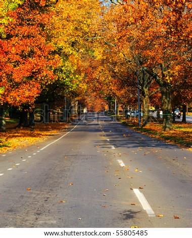 fall tree road - stock photo