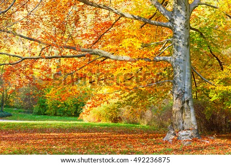 fall tree with golden leaves in sunny day close up