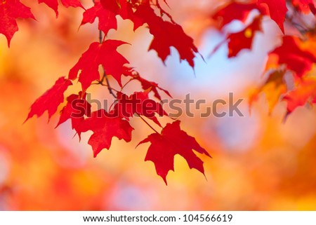 fall trees and leaves - stock photo