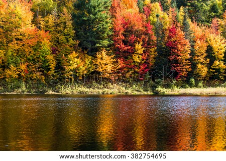 Fall trees in Vermont on the lake shore