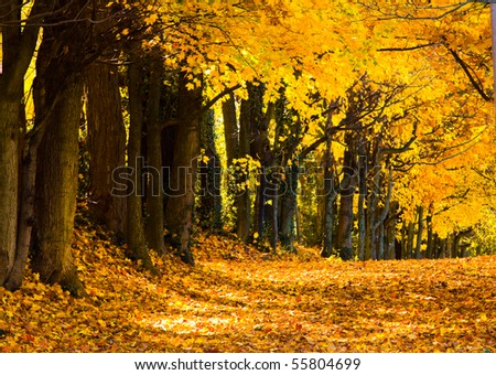 fall trees road - stock photo