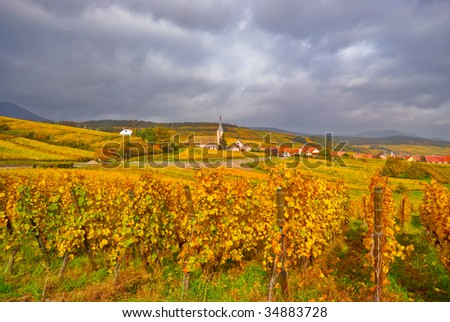 Fall Vineyard with Village in the Background - stock photo