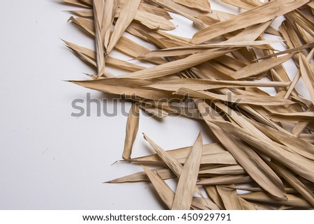 falled bamboo leaves in studio lighting with copy space