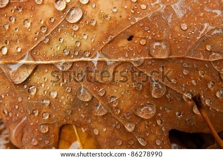 Fallen autumn leaf closeup with raindrops - stock photo