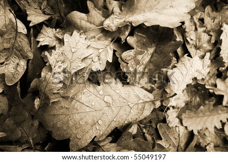 Fallen autumn leaves after rain - stock photo