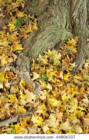 Fallen Autumn Leaves at the Base of a Beautiful Tree Trunk Vertical - stock photo