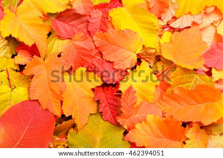 Fallen autumn leaves background.