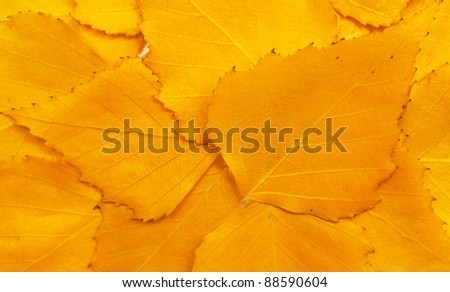 Fallen autumn leaves background - stock photo