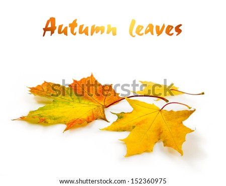 fallen autumn leaves, clipping path included - stock photo