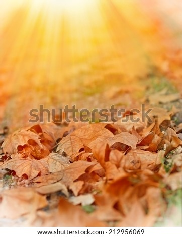 Fallen autumn leaves illuminated by sunlight - stock photo