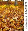 Fallen autumn leaves in the park - stock photo