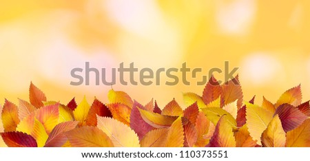 Fallen autumn leaves lying on the ground - stock photo