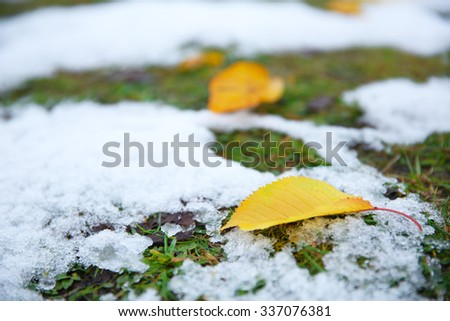 Fallen autumn leaves on grass background