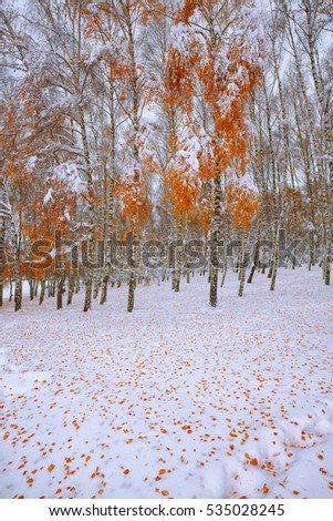 Fallen autumn leaves on  snow in the forest. Lots of snow
