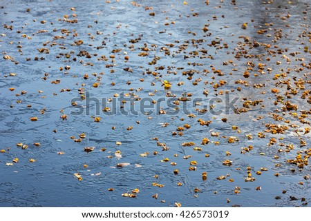 Fallen autumn leaves on the first ice - stock photo