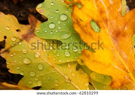 Fallen autumn leaves with raindrops - stock photo