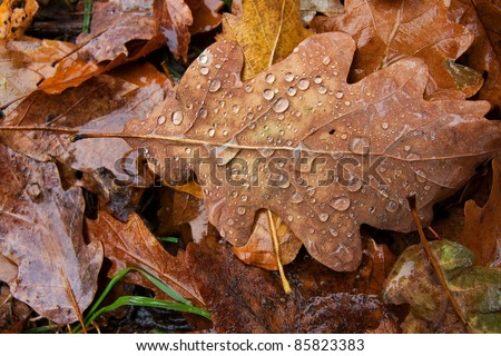 Fallen autumn leaves with raindrops on the ground - stock photo