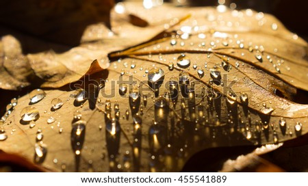 fallen autumn leaves with water drops