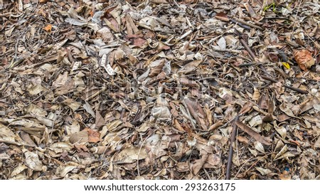 Fallen Brown Dry Leaves Background Texture