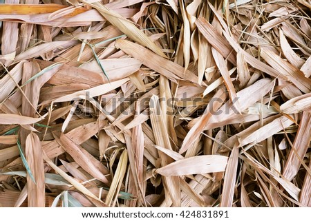 Fallen brown leaf of bamboo tree on ground